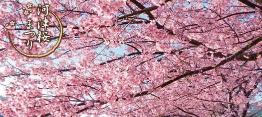 《會員推廣碼 GK980,滿$500再減$50》【當地遊@日本】東京初櫻の祭。春日浪漫一天遊 (4人成行‧已包小費)